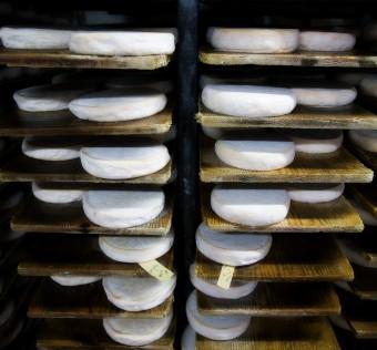 Le séchage/ préaffinage des reblochon sur planches de bois brut